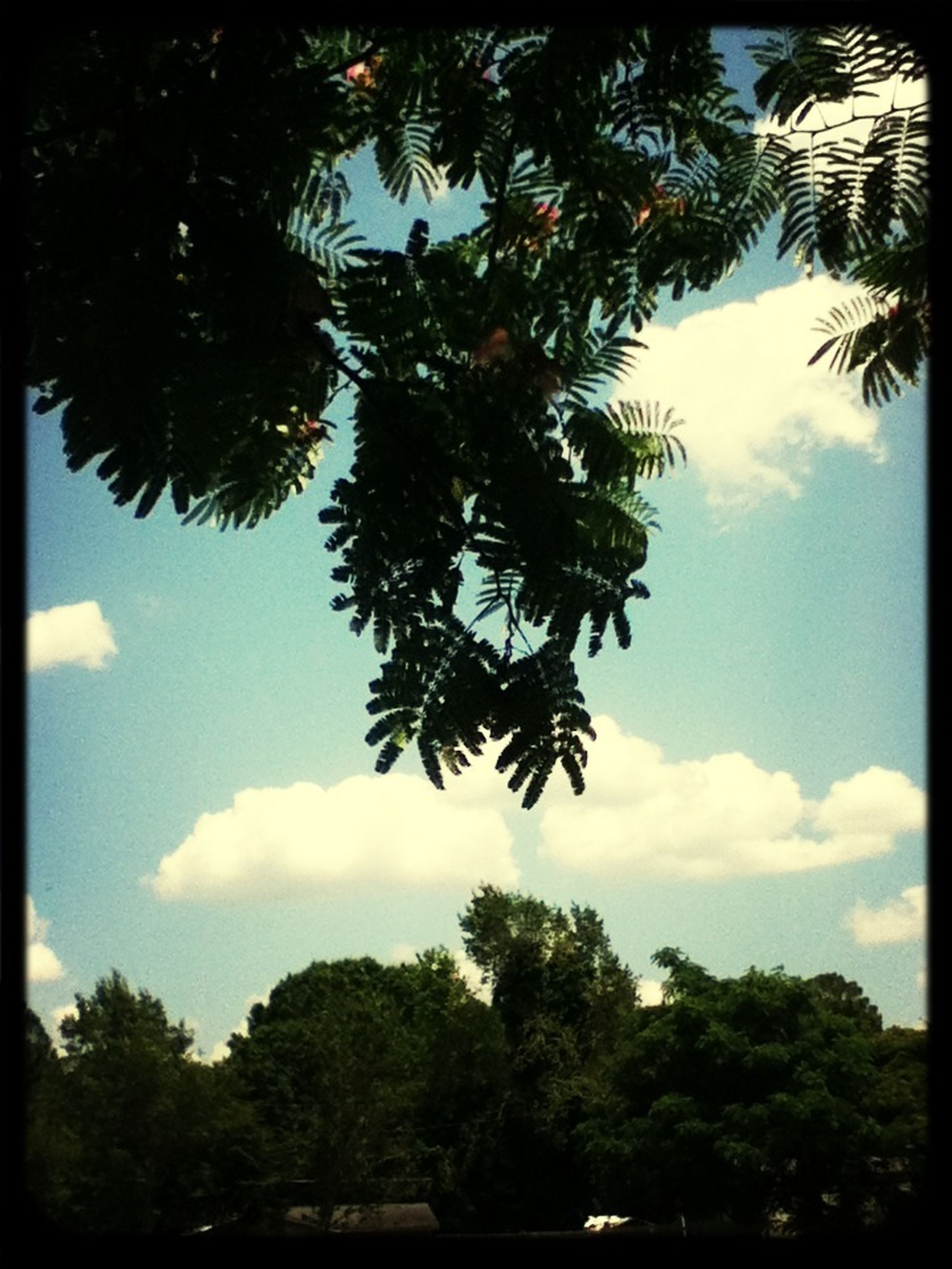 tree, transfer print, sky, auto post production filter, tranquility, growth, tranquil scene, beauty in nature, branch, nature, scenics, palm tree, cloud - sky, cloud, silhouette, tree trunk, green color, low angle view, day, no people