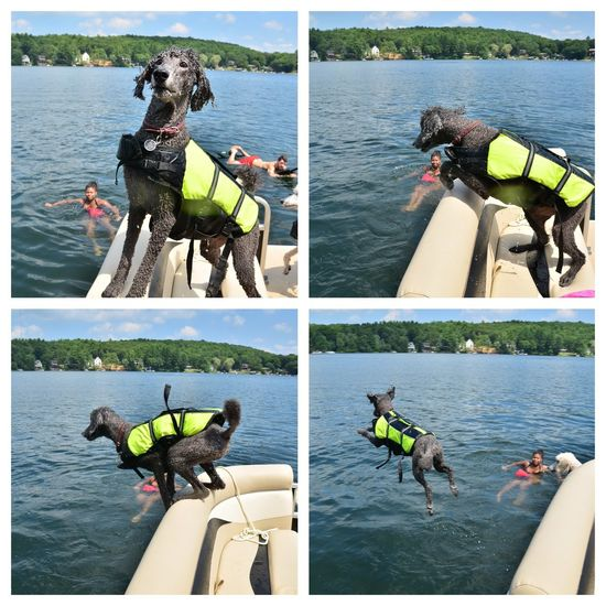 My Dogs Are Cooler Than Your Kids I Love My Dog Dogstagram Lake Swimming Jump My Dog