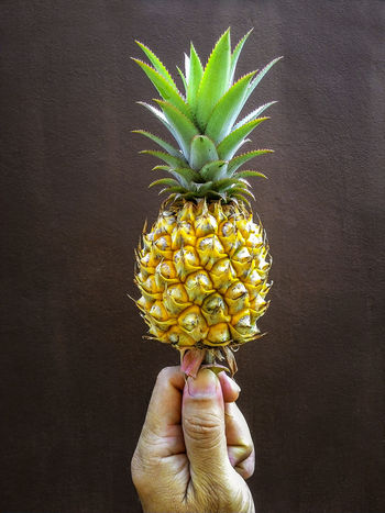 Closeup of hand holding up pineapple against brown wall background Hand Holding PineappleClose-up Fruit Healthy Eating Ripe Plant Natural LightBrown Wall First Eyeem Photo Fine Art Photography Colour Of Life