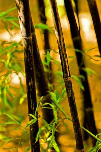 Close-up of bamboo plant on field