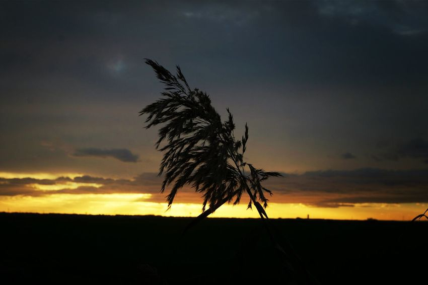 Sundown Sun_collection Sunset #sun #clouds #skylovers #sky #nature #beautifulinnature #naturalbeauty #photography #landscape Sunset_collection
