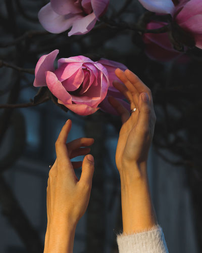 Close-up of hand by pink flower