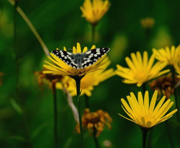 Butterfly - Insect Butterfly ❤ Flower Flowering Plant Beauty In Nature Plant Fragility Vulnerability  Freshness Flower Head Yellow Insect Petal Focus On Foreground Close-up