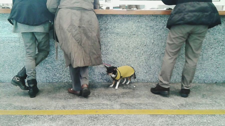 Dog Waiting Que In Lin