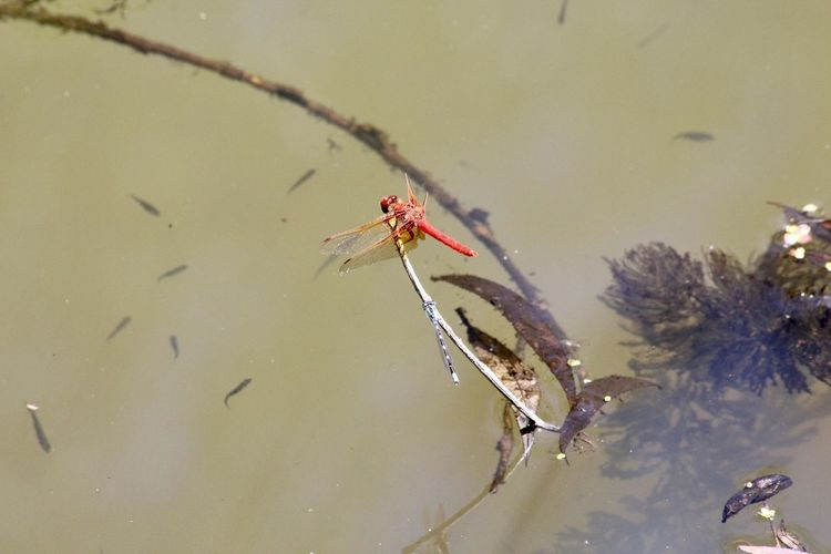 High angle view of insect on lake