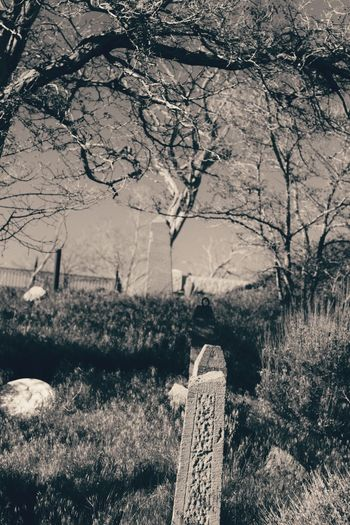 Tree Tombstone Nature Cemetery No People Day Outdoors Tranquility Landscape Plant Gravestone Beauty In Nature Close-up Graveyard Shadows & Lights Dark Photography Blackandwhite Darkness And Light Shadow Black & White By Tisa Clark Dark🌌 By Tisa Clark Cemetery