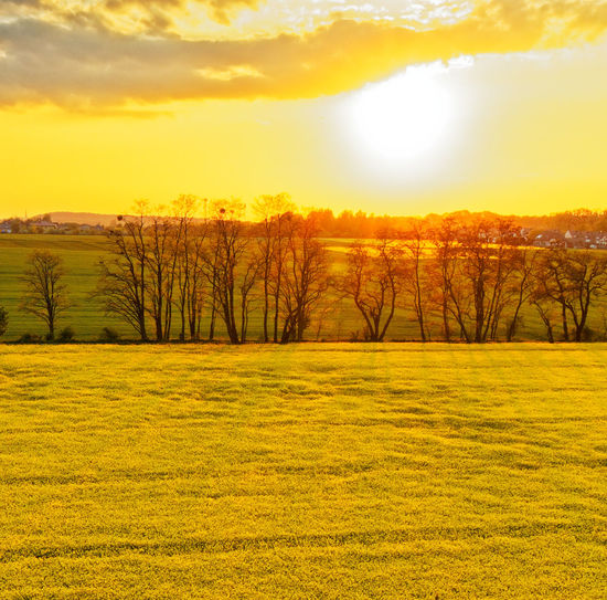 Scenic view of field against sky during sunset