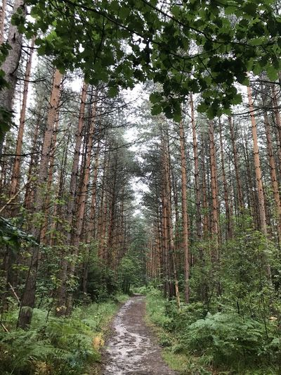 Trail amidst trees in forest