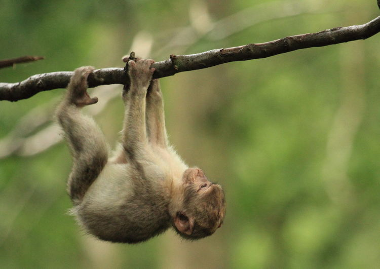Close-up of monkey on branch