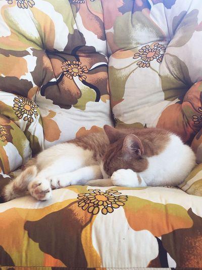 Alfe EyeEm Selects Pets Animal Themes Domestic Animals Sofa Mammal One Animal