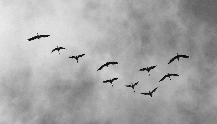 Low Angle View Of Silhouette Birds Against Clouds
