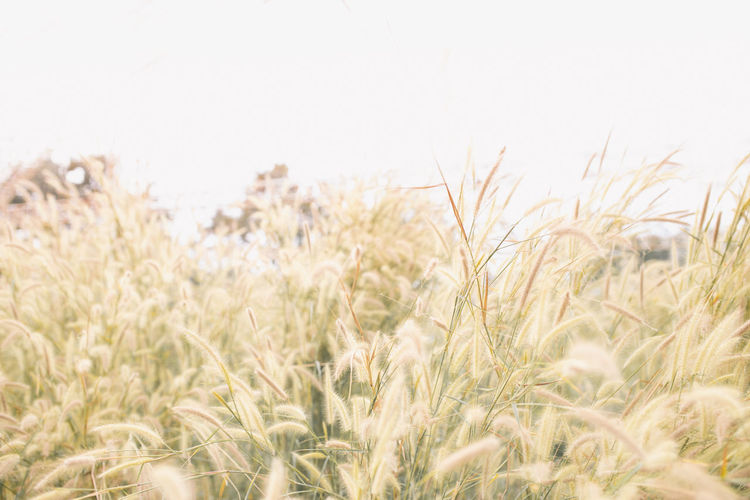 Plant Landscape Growth Crop  Agriculture Sky Land Nature Field Environment No People Clear Sky Outdoors Wind Beauty In Nature Grass