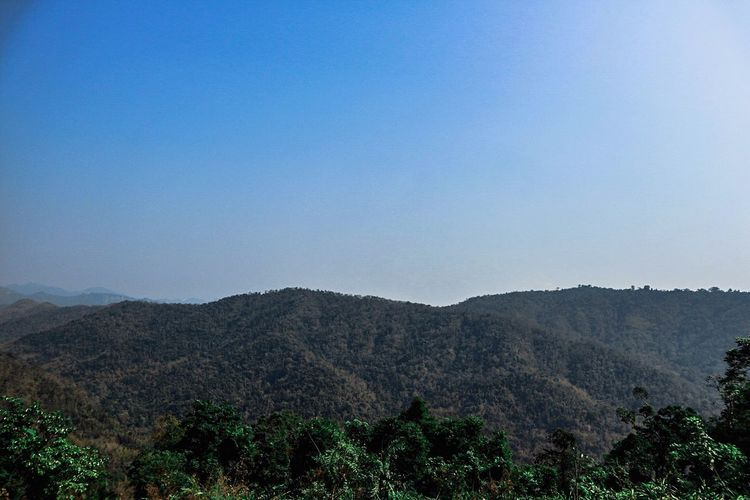 Tree Agriculture Nature Hill Landscape Mountain Range Sky