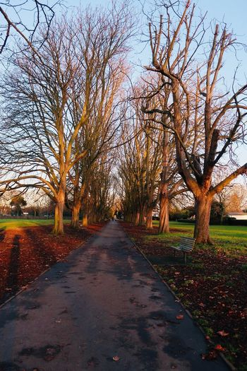 Ealing Nature Path Shadows & Lights Tree Walpole Park, Ealing Winter Autumn Beauty In Nature Clear Sky Dusk Grass Growth Landscape Leaf No People Outdoors Pathway Scenics The Way Forward Tranquility Tree