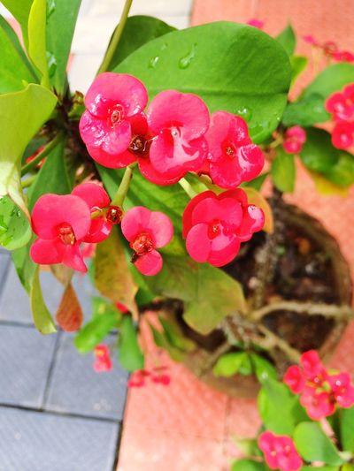Flower Love👍✌️✌💐 Flower Freshness Fragility Petal Leaf Beauty In Nature