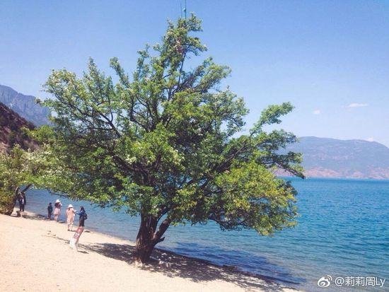 Tree Nature Water