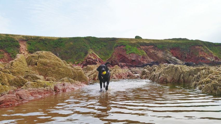 Protecting Where We Play Labrador Puppy Black Labrador Beach Sea And Sand Rock Pool Fun Happy Sandy Haven