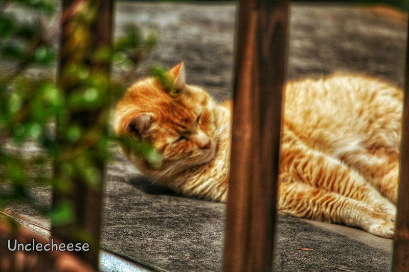 Lazy Sunday ~