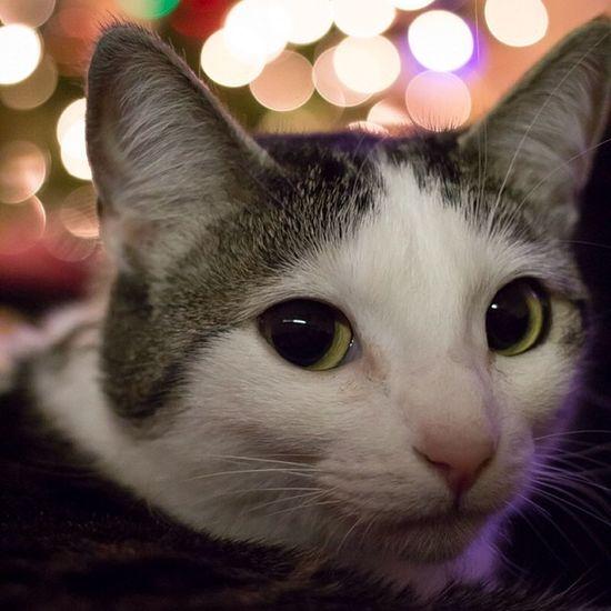 Catsofinstragram Achilles