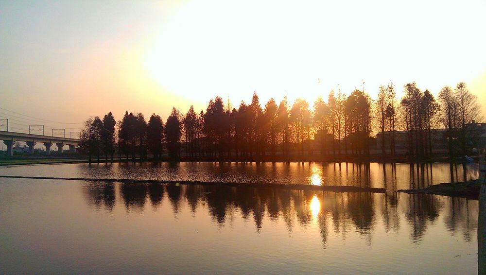 落羽松 Trees Water Reflections Sunset Landscape Nature Sunsets Mirror Reflection Shadows & Lights Overexposed Enjoying Life