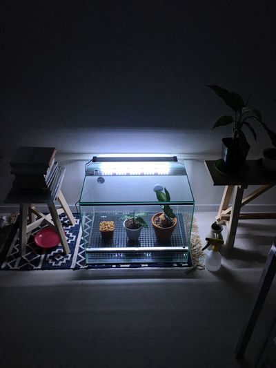 High angle view of illuminated potted plants on table at night