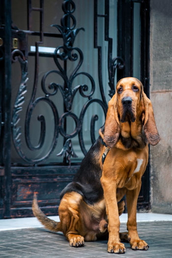 Portrait of dog sitting on entrance