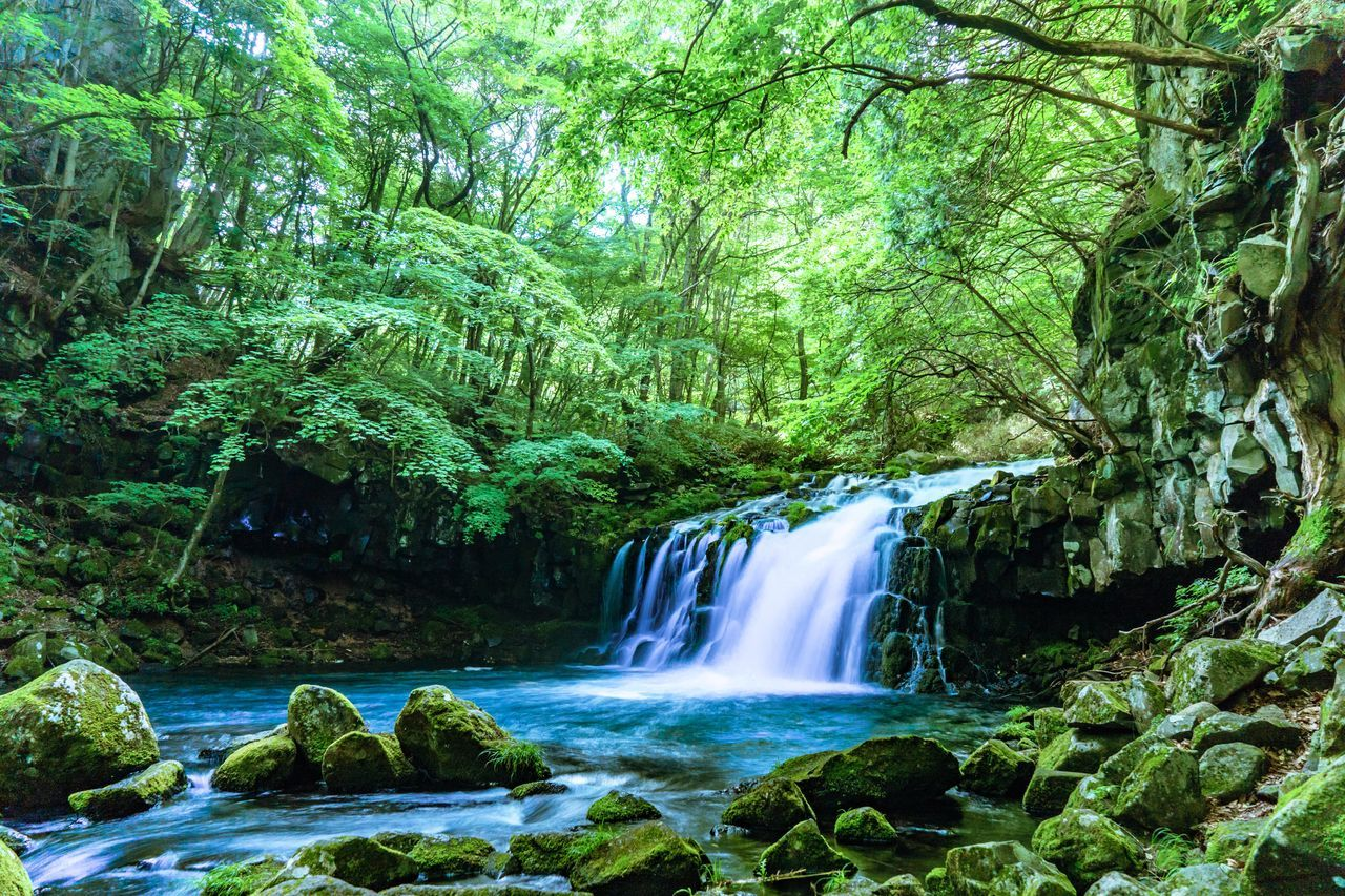 Idyllic View Of Waterfall At Forest