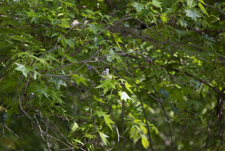 Small bird perching on a tree