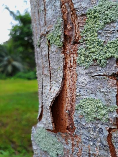 nature in love Wood - Material Close-up Beauty In Nature Tree Trunk Nature Outdoors Landscape Tree Eye4photography  Dramatic Sky Beauty In Nature Eye4photography  Vacations Indonesia_photography Gadgetgrapher Ig_photooftheday Livefolkindonesia EyeEm Best Shots Nature Gg_telusurkaltim