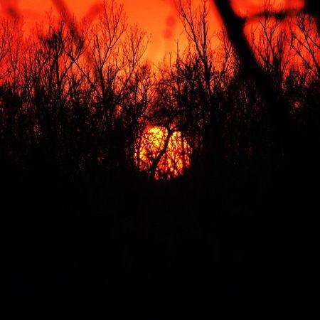 The hiding Sun Sunset Sunsetlovers Sunsetporn Instamood Instagrammers Instamagyarorszag Mik In_hun Nikon Hungary Viewmysunset Tgif_sunset Rsa_trees