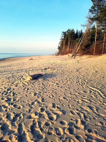 Sunset Sanset Pine Tree Tree The San Rampage  Sand Dune Water Sea Beach Clear Sky Sand Summer Desert Arid Climate Sky