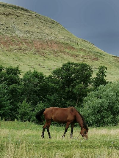 Horse Russia Nature Mountain View Mountain Mountainview Mountain_collection