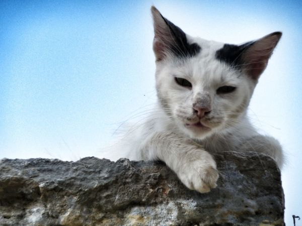 Cats Cat Symi Greece Lonely Cat Black And White Cat Blackandwhitecat Cat Lovers Cat Love It's A Cats Life Catlovers