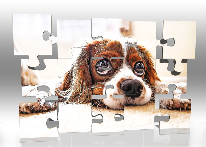Mammal Domestic Animals Pets Domestic Dog Canine One Animal Lap Dog Vertebrate Indoors  Looking At Camera Portrait Brown No People Small Text Young Animal Puzzle
