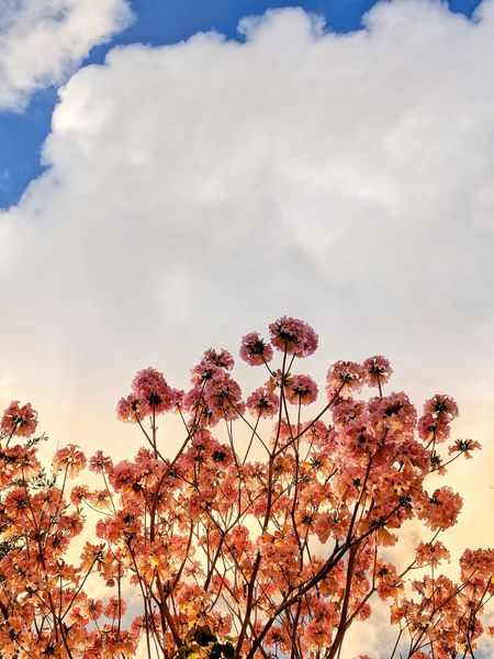 Blooming in Orlando Cloud - Sky Sky Nature Outdoors Growth No People Day Plant Beauty In Nature Tree Flower Close-up