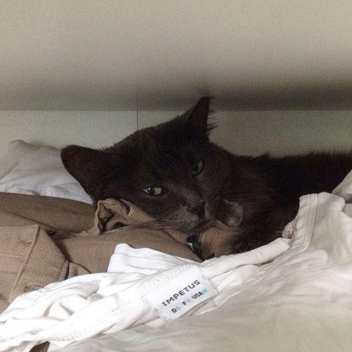 Da macht jemand Siesta in Papas T-Shirt-Schublade 🐱 Tshaga_the_cat
