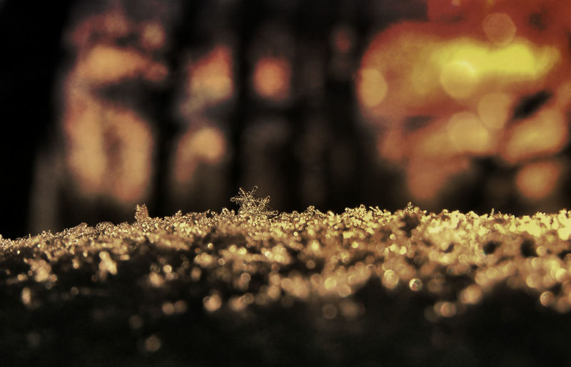 I think my camera takes photos of ghosts lol Beauty In Nature Bokeh Bokehlicious Ghost Faces Golden Nature Outdoors Selective Focus Snow Snowflakes Winter
