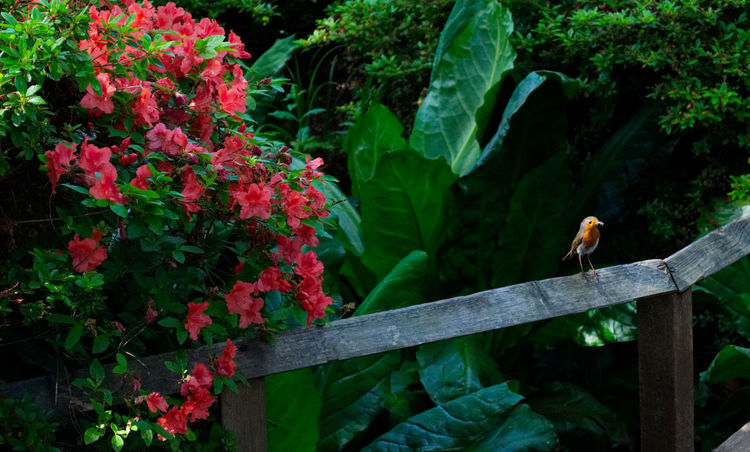 Animal Themes Animals In The Wild Beauty In Nature Bird City Escape Flower Garden Green Color Growth Leaf Nature Nature No People One Animal Outdoors Plant