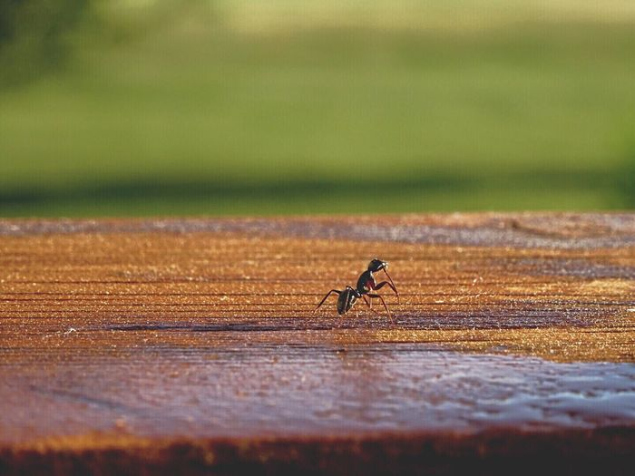 Close-Up Of Ant On Table