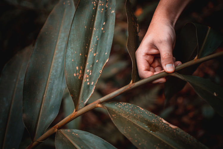 Man in Wilderness EyeEm Best Shots EyeEm Nature Lover Body Part Close-up Finger Focus On Foreground Hand Holding Human Finger Human Hand Leaf Leaves Nature Outdoors Plant Plant Part Selective Focus Unrecognizable Person