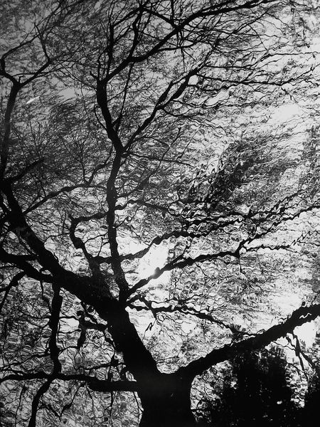Reflection Nature Branch Day Blackandwhite Photography Beauty In Nature Growth Forest No People Outdoors Leaf Sky My Travel In Japan Travel Photography EyeEmNewHere Trees And Nature The Week On EyeEm Lake Travel Destinations Water