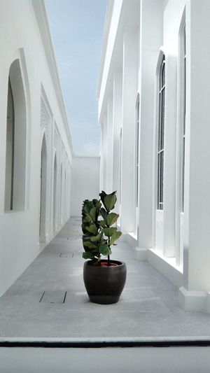 Potted plant on walkway of building