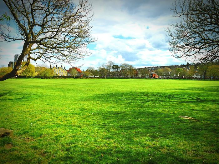 Taken by me on my Nikon S3200 today. Spring Nature FaringdonPark Swindon Wiltshire Uk Europe 2016