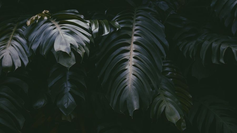 Dark photograph of tropical green foliage Leaves Tropical Plant Plants Green Thailand Nature Nature Photography Market Bestsellers 2017
