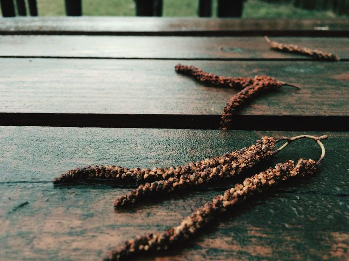 Close-up of catkins fallen on wet wooden bench