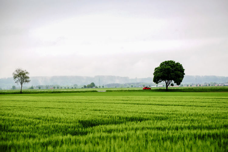 A Rd car on the road in Bavaria Agriculture Beauty In Nature Crop  Cultivated Cultivated Land Day Farm Farmland Field Green Green Color Growth Harvesting Landscape Nature Outdoors Plant Plantation Rural Scene Scenics Sky Solitude Tranquil Scene Tranquility Tree