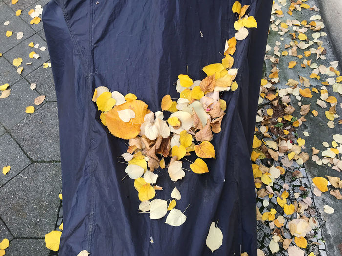 Low section of person standing on yellow flowering plant during autumn