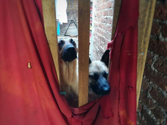 Close-up of dog peeking through door