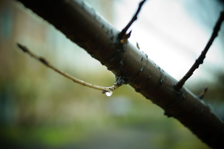 Rainy autumn evening Nature Photography Winter Is Coming Walking Around Depth Of Field