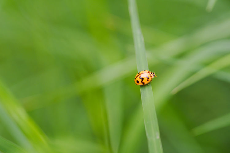 Lady bug 2 Animal Animal Antenna Animal Themes Arthropod Beauty In Nature Close-up Day Focus On Foreground Fragility Grass Green Green Color Growth Insect Ladybug Nature No People Outdoors Plant Selective Focus Stem Wildlife